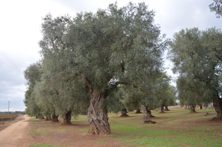 2wvilla-ulivisecolari-2.jpg